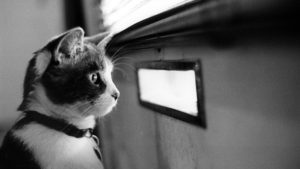 cat-waiting-for-the-mail-9924