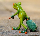 frog-farewell-travel-luggage