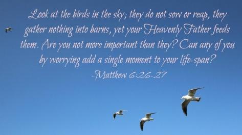 scripture birds