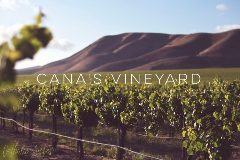 The Birth of Cana's Vineyard, A Catholic Couples Group